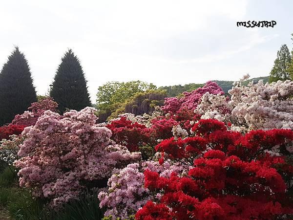 東京足利花園 (17).jpg