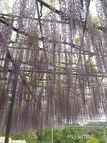 東京足利花園 (20).jpg