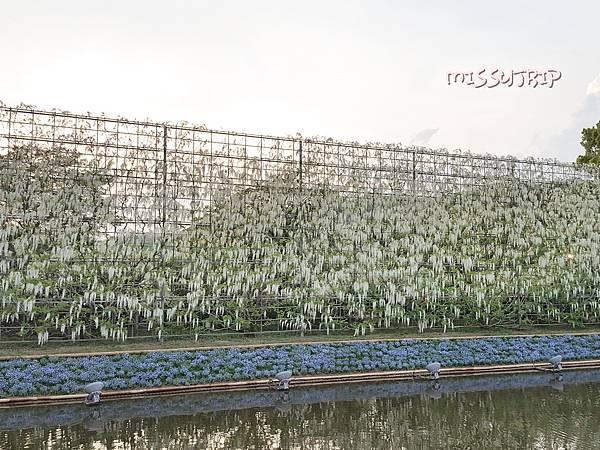 東京足立花園 (44).jpg