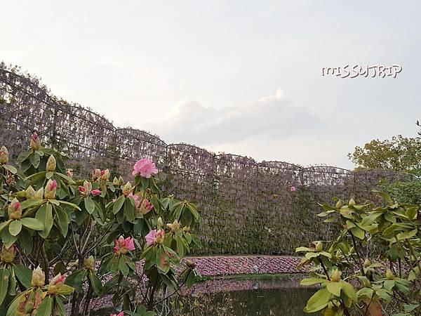 東京足立花園 (47).jpg