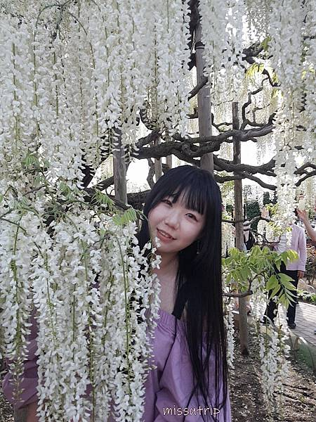 東京足利花園 花期