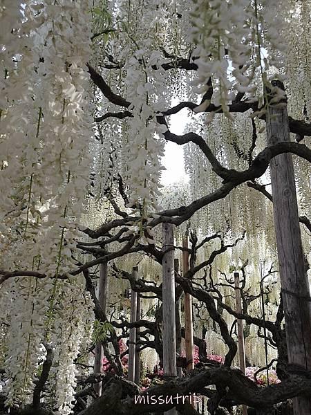 東京足立花園 (60).jpg