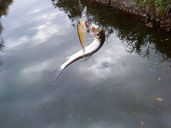 fish_DSC00084.JPG