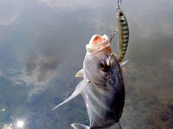 fish_DSC00105.JPG