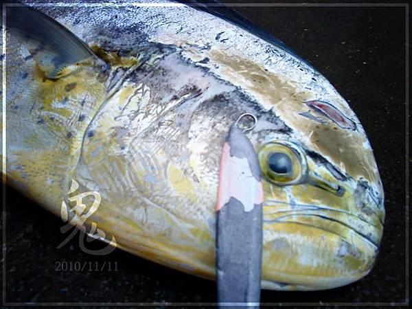 SN3 首次中魚