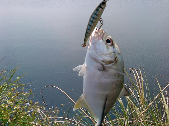 fish_DSC00101.JPG