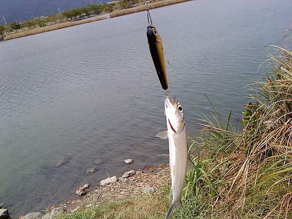fish_DSC00092.JPG