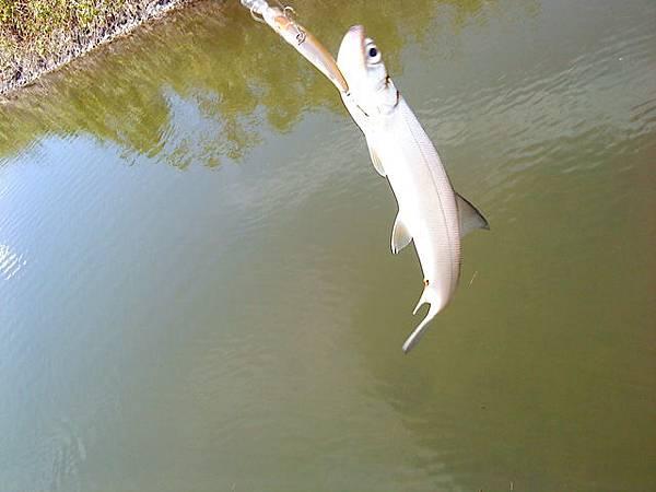 fish_DSC00076.JPG