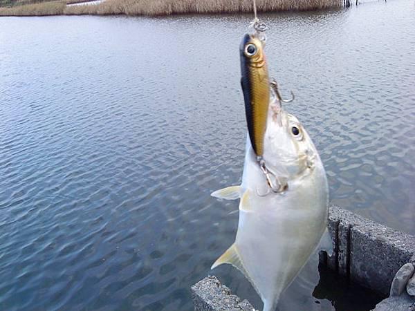 fish_DSC00079.JPG