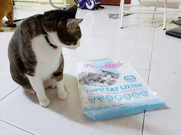 貓砂_181021_0013.jpg