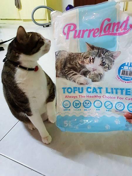 貓砂_181021_0016.jpg