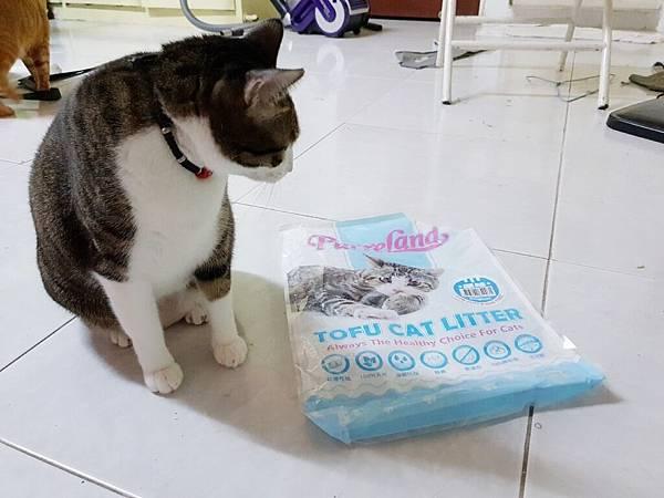 貓砂_181021_0015.jpg