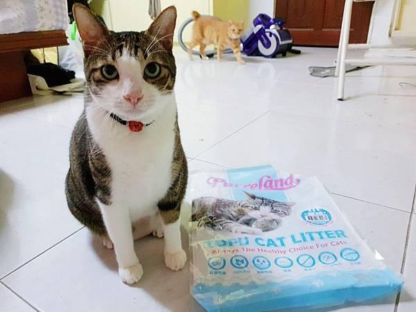 貓砂_181021_0017.jpg