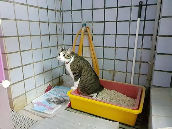 貓砂_181022_0065.jpg