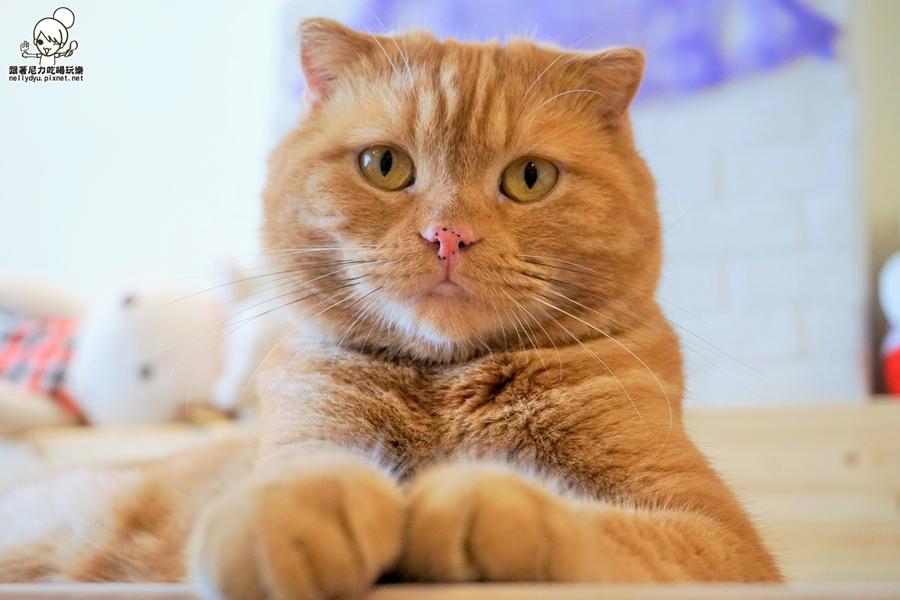 逗貓趣 寵物餐廳23.JPG