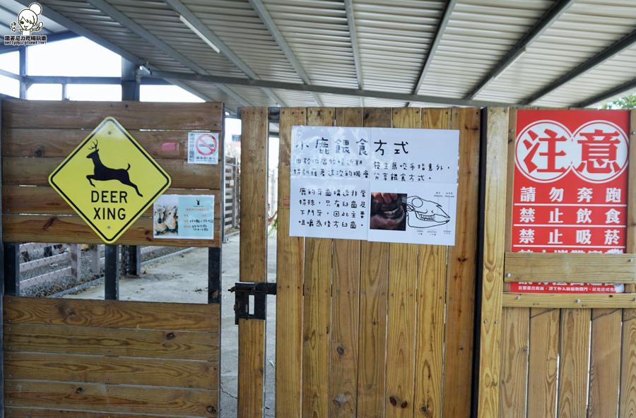 墾丁旅遊  梅花鹿 小鹿斑比 奈良-01623.jpg