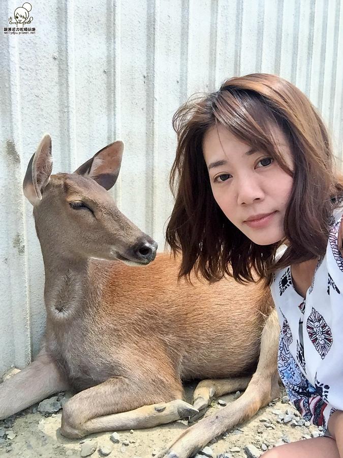 墾丁旅遊  梅花鹿 小鹿斑比 奈良-540034.jpg