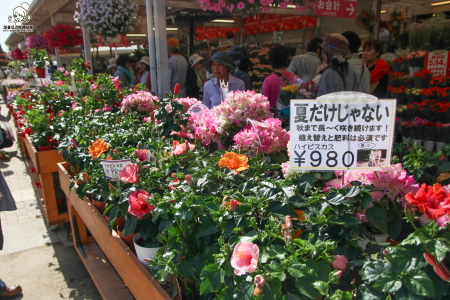 日本紫藤花 浪漫紫藤-0347.jpg