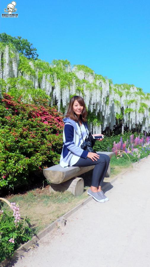 足利紫藤花-140712.jpg