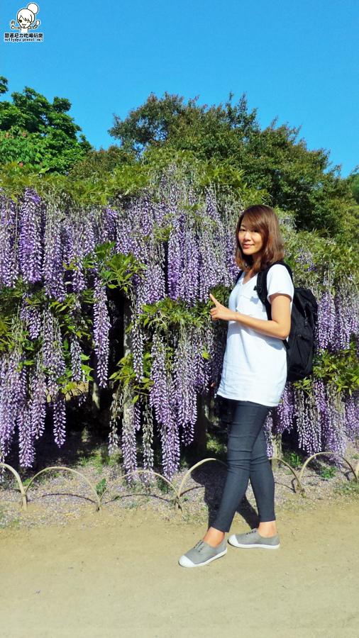足利紫藤花-145130.jpg