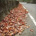 2008-12-28_09.jpg