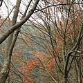 2008-12-28_10.jpg
