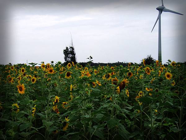 2009-06-14_36.jpg