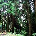 2009-07-12_14.jpg
