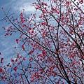 2010-01-30_07.jpg