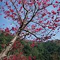 2010-01-30_08.jpg