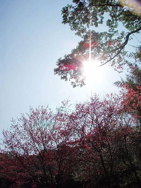 2010-01-30_56.jpg