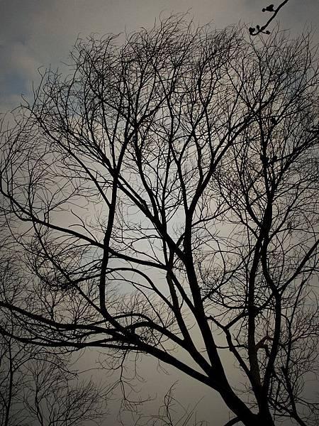 2010-02-14_020.jpg