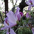 2010-02-14_064.jpg