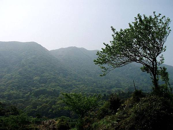 2010-04-01_11.jpg