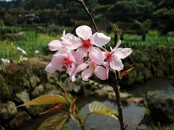 2010-04-01_13.jpg