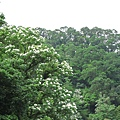 2010-04-25_27.jpg