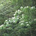 2010-04-25_46.jpg