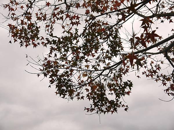 2011-01-01_39.jpg