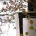 2011-01-01_40.jpg