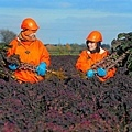 sprouts-picking_3191481b.jpg