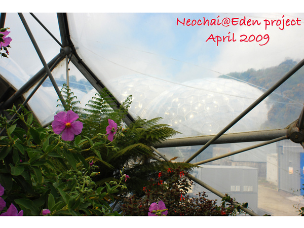 blog-eden project-27.jpg