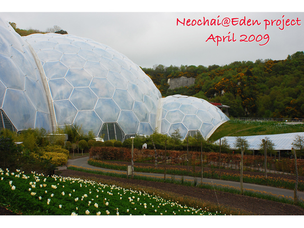 blog-eden project-38.jpg