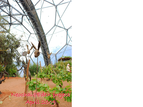 blog-eden project-31.jpg