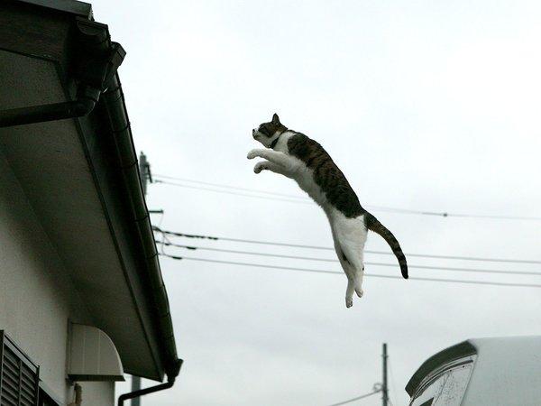 1600x1200_homeless_cat_00dsa04-019600-b-x
