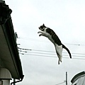 1600x1200_homeless_cat_00dsa04-019600-b-x