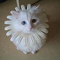 cat (6)