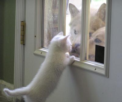 cat (9)