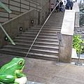 中庭的青蛙