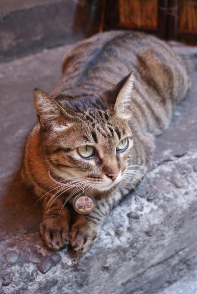 路邊親人的貓咪'