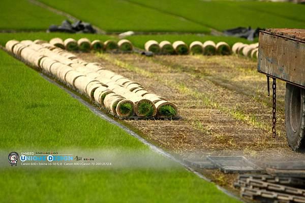 東部第一期稻作 插秧1.jpg